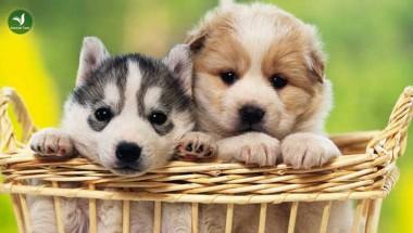 Tour du lịch dành riêng cho chó cưng