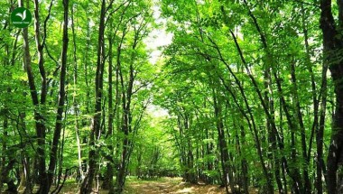 Kĩ năng sinh tồn khi lạc vào rừng sâu