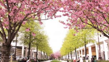 Du lịch Paris nên đi vào tháng mấy đẹp nhất?